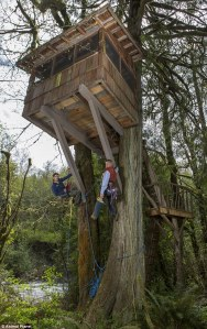 treehousing